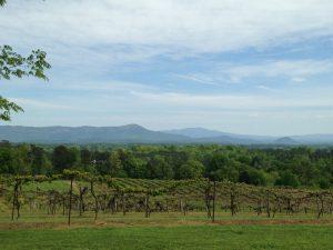Morris Vineyard & Tennessee Mountain View Winery LLC